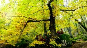 bosque-de-la-herreria3jpg