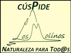 cuspide